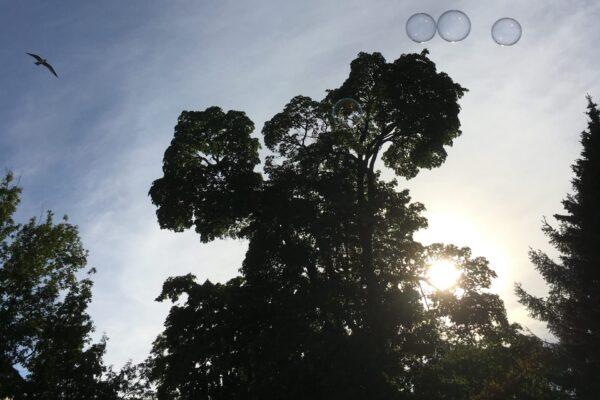 Kuvituskuva, jossa taivas, puita ja saippuakuplia.